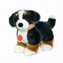 Hund: Berner Sennenvalp