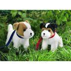 Hundvalpar - Jack Russel Terrier